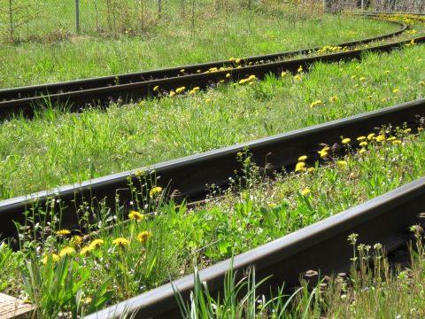 Bloemen naast het spoor